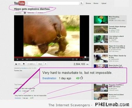 Hippo gets diarrhea funny youtube comment at PMSLweb.com