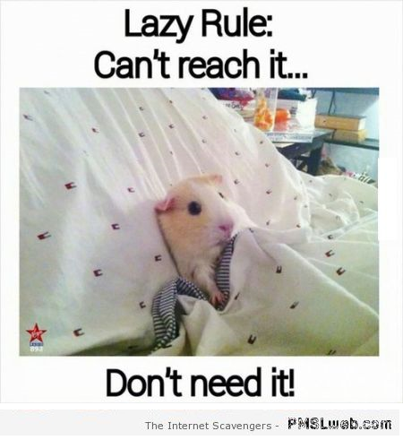 Funny can't reach it don't need it rule at PMSLweb.com