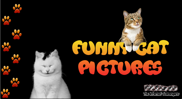 Funny cat pictures at PMSLweb.com