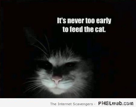 It's never too early to feed the cat – Hump day BS at PMSLweb.com