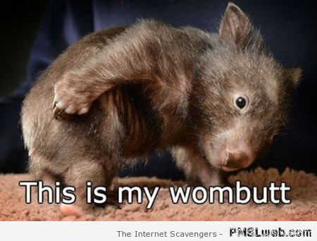 This is my wombutt – Wednesday funnies at PMSLweb.com