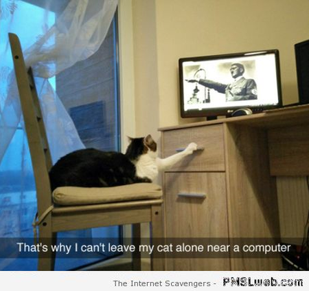 Why I can't leave my cat alone funny picture at PMSLweb.com