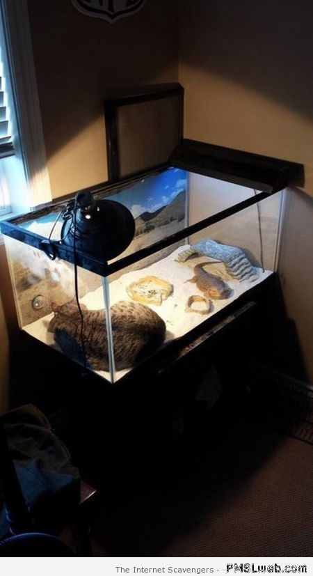 Funny cat in reptile tank needs heat at PMSLweb.com