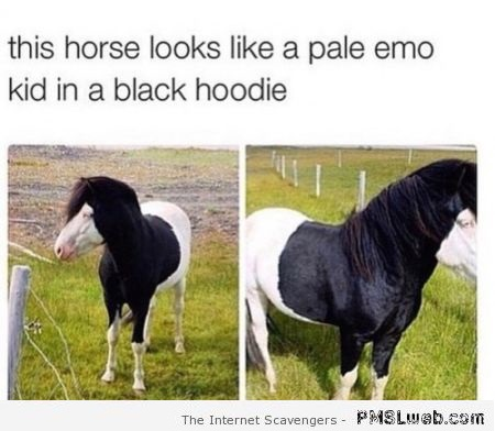 Funny this horse looks like an emo kid – Thursday guffaws at PMSLweb.com