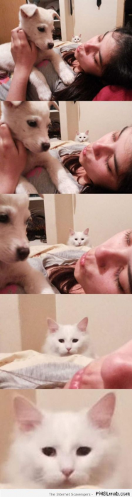 13-funny-look-on-cats-face