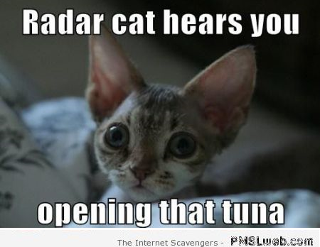 Cat can hear you opening the tuna meme – Funny cat pictures at PMSLweb.com