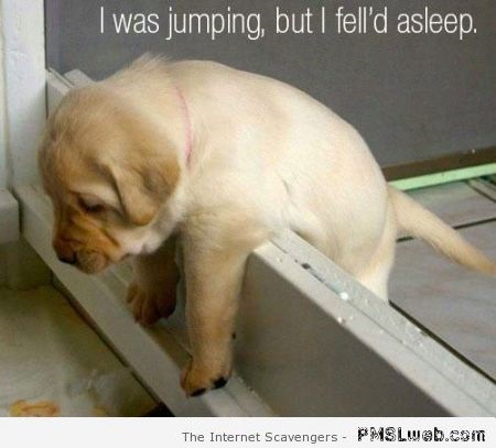 Funny puppy falls asleep while jumping at PMSLweb.com