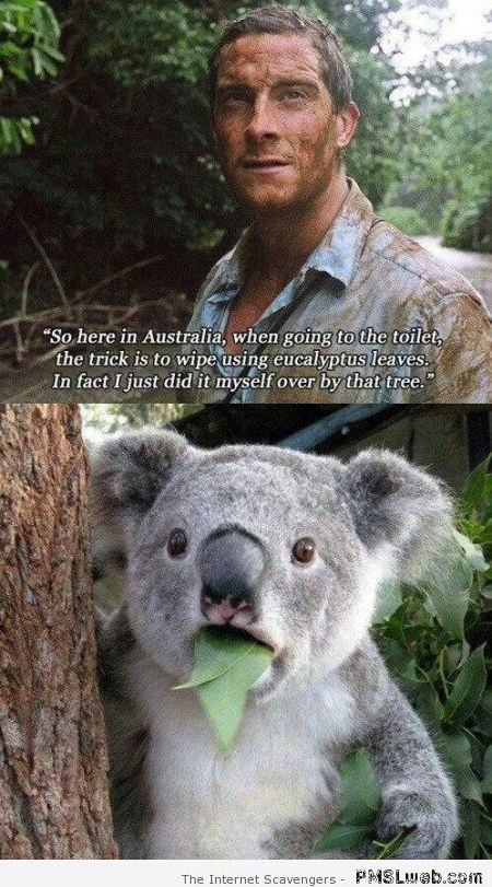 Funny Bear Grylls and the koala at PMSLweb.com