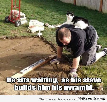 Human is the cat's slave meme at PMSLweb.com