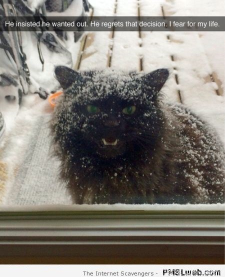 Cat wanted out in the snow humor at PMSLweb.com