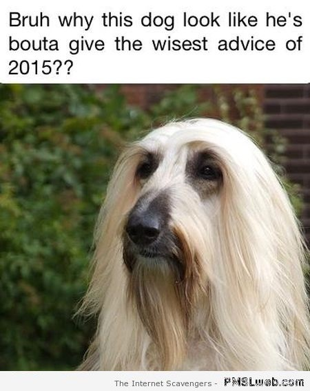 Dog giving wisest advice of 2015 – Tuesday LOL at PMSLweb.com