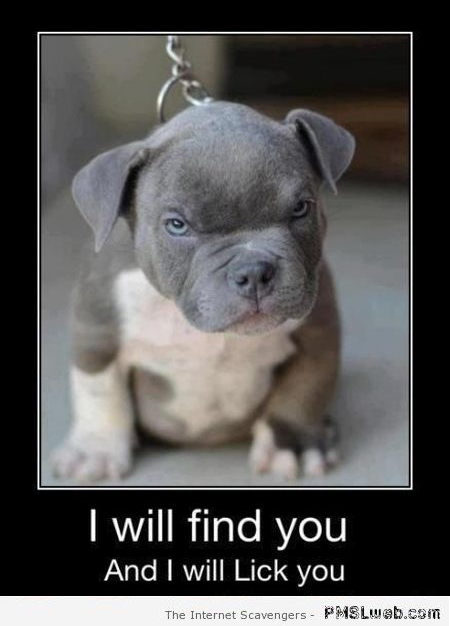 Funny dog picture I will find you at PMSLweb.com