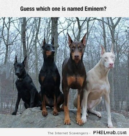 Guess which dog is named Eminem humor at PMSLweb.com