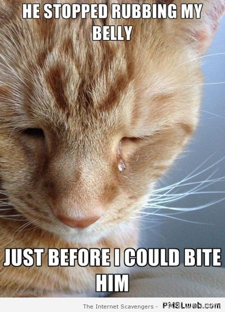First world cat problems meme at PMSLweb.com