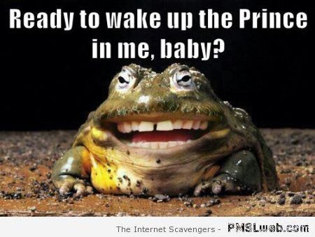 Wake up the Prince in me frog meme – Weekend guffaws at PMSLweb.com
