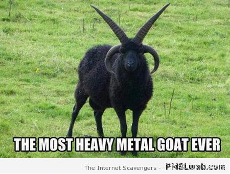 Heavy metal goat meme – Hump day BS at PMSLweb.com