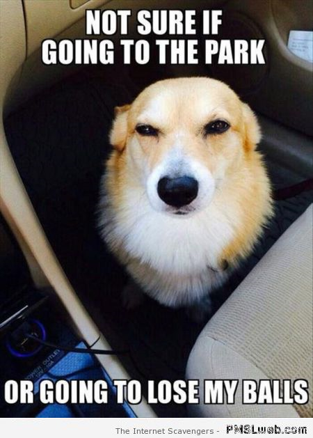 Funny suspicious dog meme – Funny dog pictures at PMSLweb.com