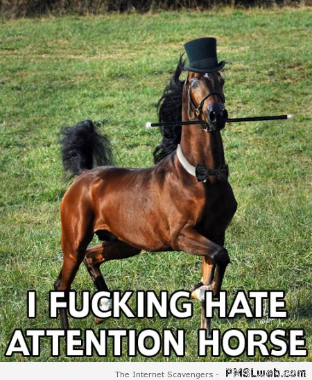 I hate attention horse meme – Thursday guffaws at PMSLweb.com