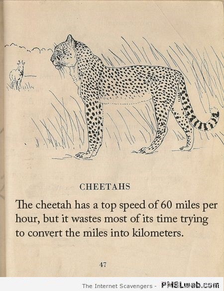 Funny fact about cheetahs at PMSLweb.com