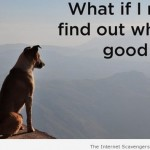 What if I never find out who's a good boy – Funny Sunday pics at PMSLweb.com