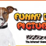 Funny dog pictures at PMSLweb.com