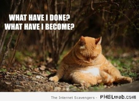 What have I become cat meme at PMSLweb.com