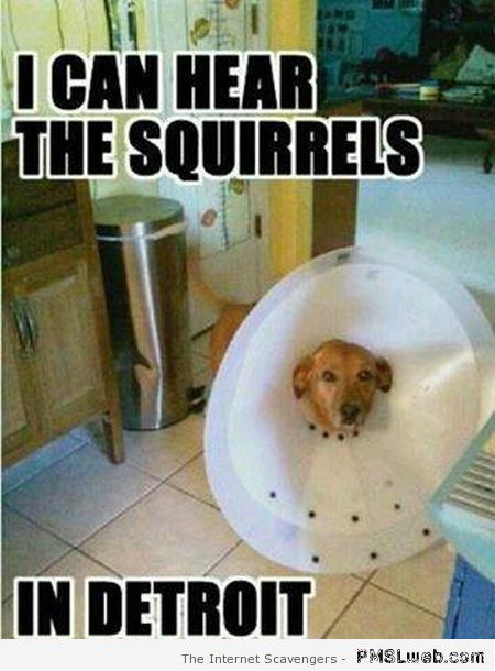 I can hear the squirrels dog meme at PMSLweb.com