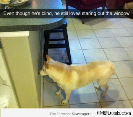 Blind dog joke at PMSLweb.com