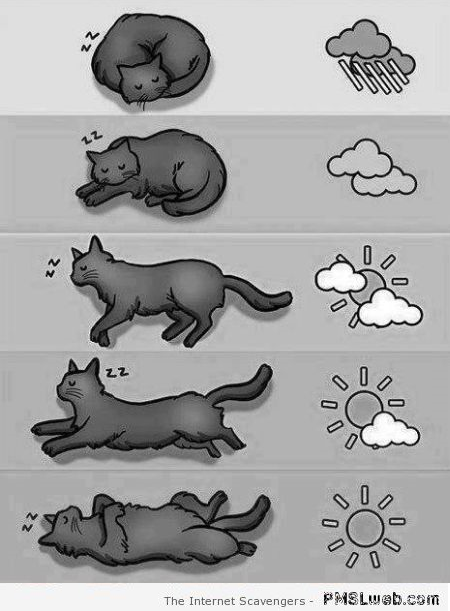Funny cat sleeping guide at PMSLweb.com