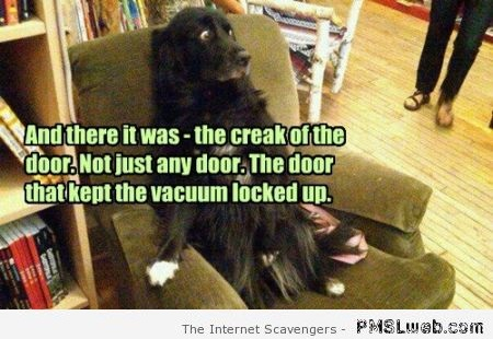 Funny dog and the crack of the vacuum door at PMSLweb.com