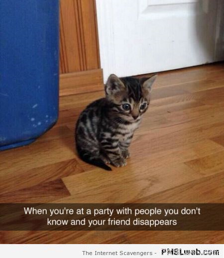 When your friend disappears at a party – Funny cat pictures at PMSLweb.com