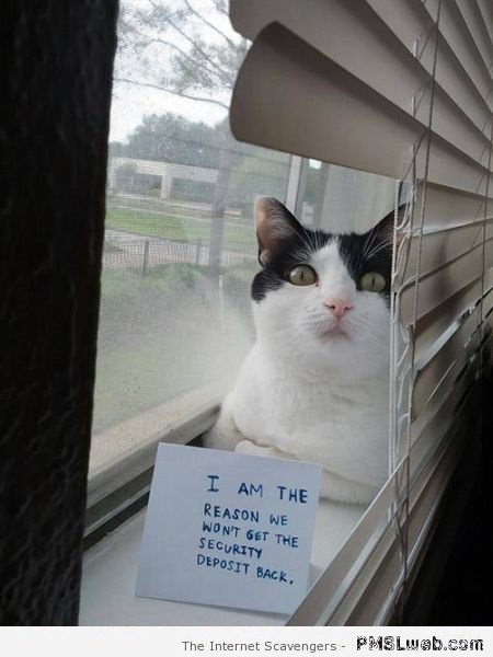 Cat is the reason you won't get your security deposit back humor at PMSLweb.com