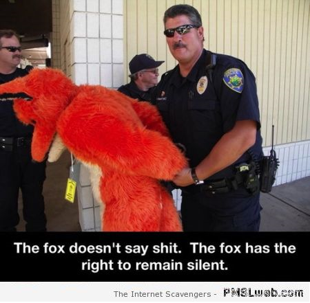 The fox has the right to remain silent humor at PMSLweb.com