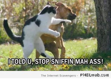 Stop sniffing my ass cat meme at PMSLweb.com
