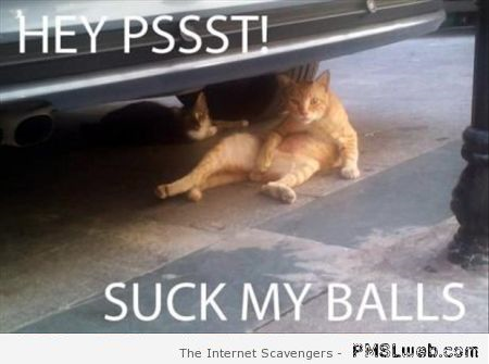 Suck my balls cat humor at PMSLweb.com