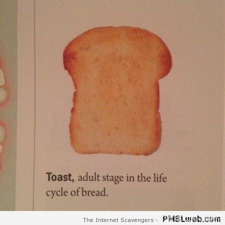 Toast is the adult form in the life cycle of bread at PMSLweb.com