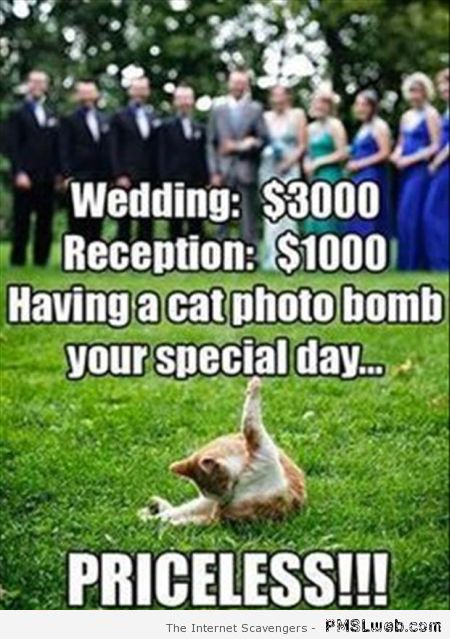 Priceless scumbag cat meme at PMSLweb.com