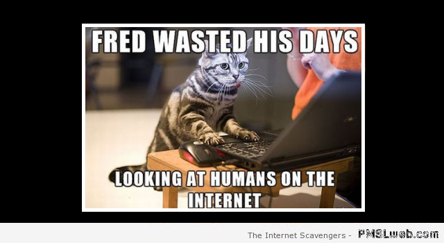 Cats looking at humans on the internet meme at PMSLweb.com