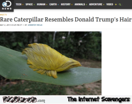 Caterpillar resembles Donald Trump's hair at PMSLweb.com