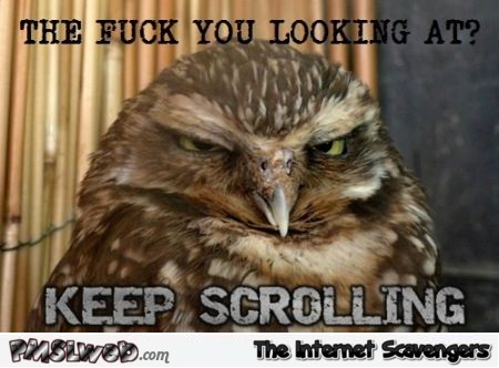 Funny keep scrolling owl at PMSLweb.com