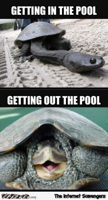 Funny your penis at the swimming pool – Daily funny pictures at PMSLweb.com