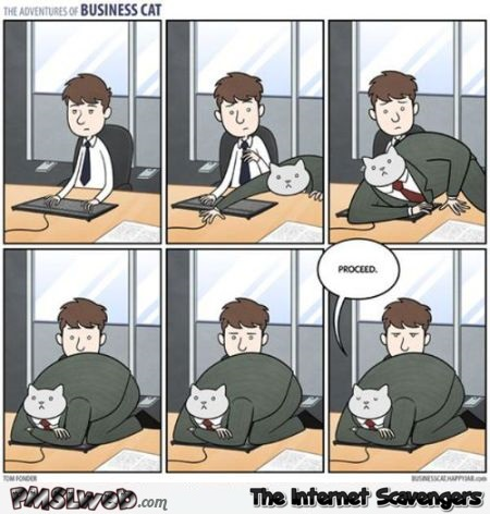 The adventures of business cat funny cartoon at PMSLweb.com