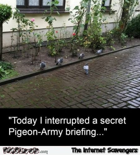Secret pigeon briefing humor at PMSLweb.com