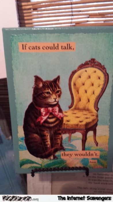 If cats could talk they wouldn't