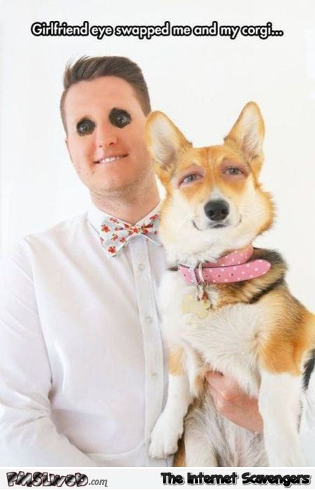 Funny eye swap with corgi @PMSLweb.com