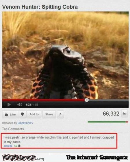 Funny spitting cobra Youtube comment at PMSLweb.com