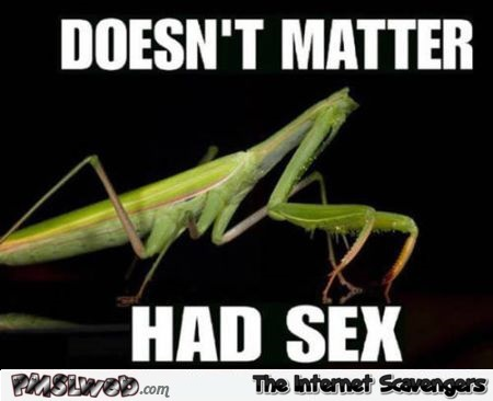 Funny praying mantis meme at PMSLweb.com