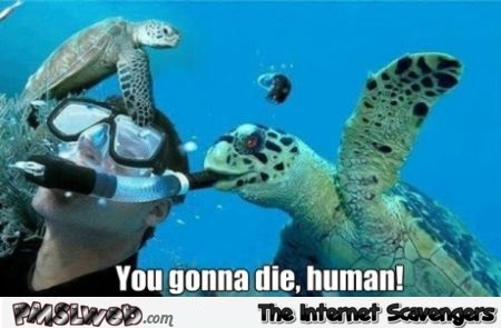 Sea turtle meme @PMSLweb.com