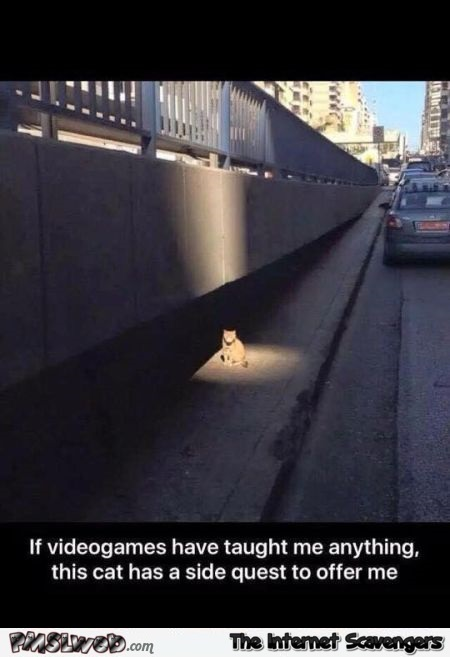 If video games have taught me anything @PMSLweb.com