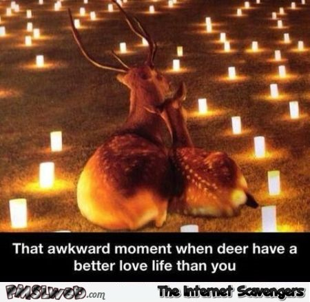 When deer have a better love life than you humor at PMSLweb.com